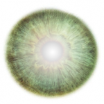 256x256 albedo texture for iris. Alpha channel contain a ramp used for limbal ring and pupil size.